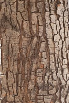 Gros plan du tronc de l'arbre