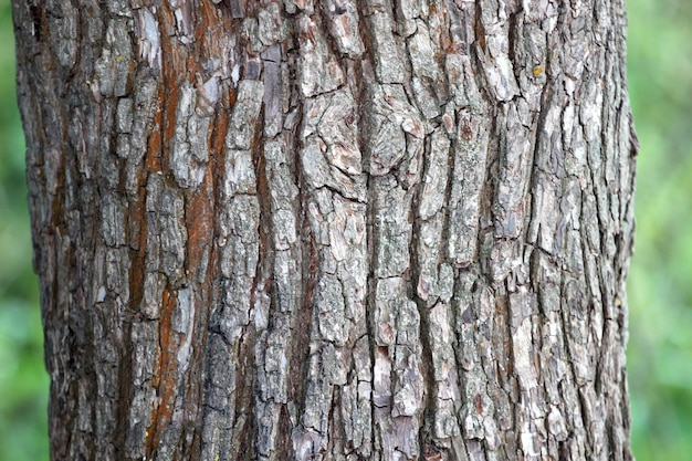 Gros plan du tronc d'arbre