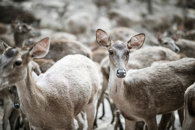 Gros plan du troupeau de cerfs. concept d'animaux.