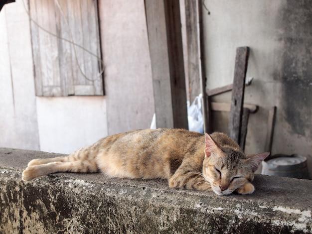 Gros plan du visage du chat endormi, se concentrant au premier plan