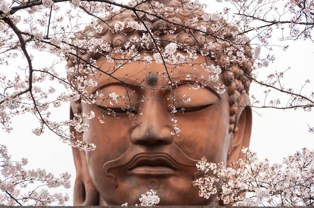 Gros plan du visage de la statue de bouddha remplissant le cadre et les fleurs de sakura au premier plan