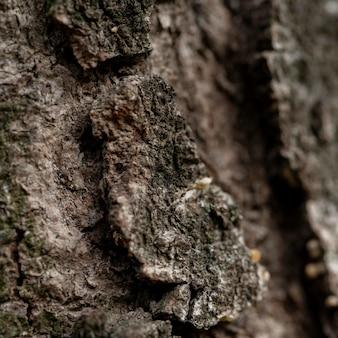 Gros plan d'écorce d'arbre naturel