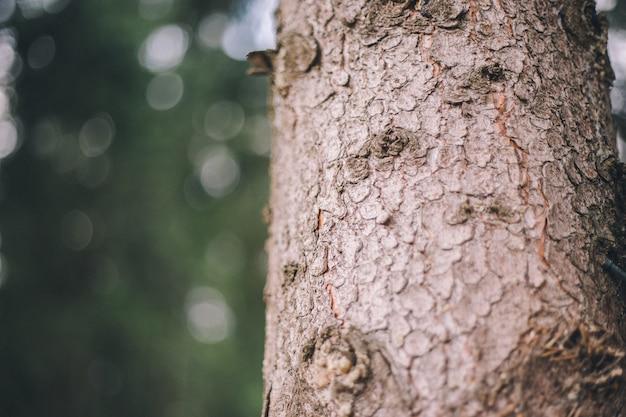 Gros plan, écorce arbre