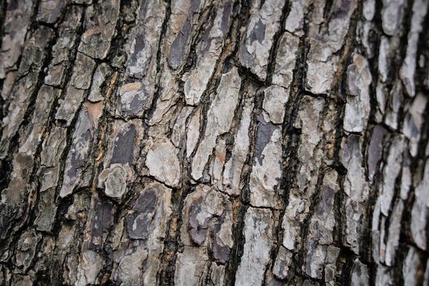 Gros plan sur l'écorce des arbres comme fond de bois texture d'amande tropicale ou d'amande d'inde