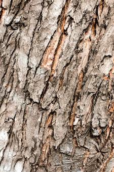 Gros plan de l'écorce des arbres