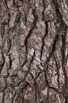 Gros plan d'écorce de pin à utiliser comme fond dans la publicité