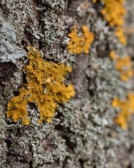 Gros plan de l'écorce des vieux arbres avec de la mousse