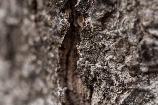 Gros plan de l'écorce des vieux arbres naturels
