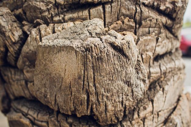 Gros plan de l'écorce d'un vieux pin.