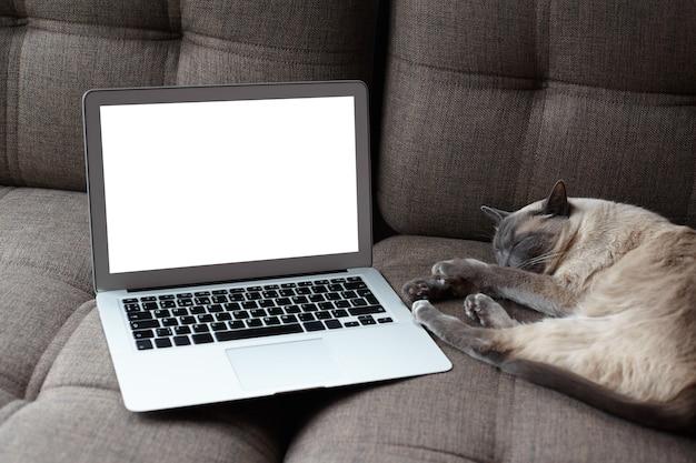 Gros plan de l'écran d'ordinateur portable blanc vide et chat endormi dans un intérieur moderne et confortable à la maison. tranquillité, confort, soins pour animaux de compagnie et concept de mode de vie.