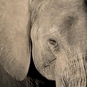 Gros plan d'éléphant