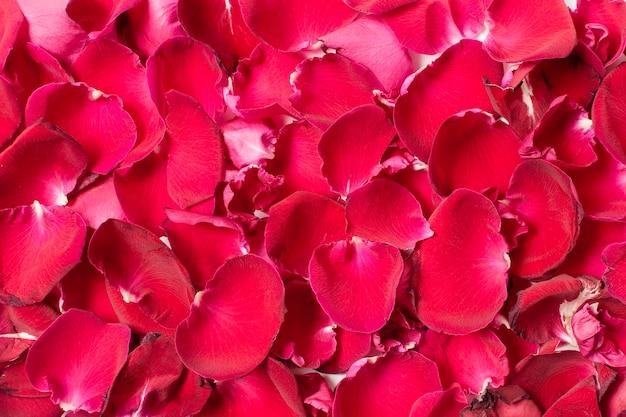 Gros plan ensemble de pétales de rose rouges