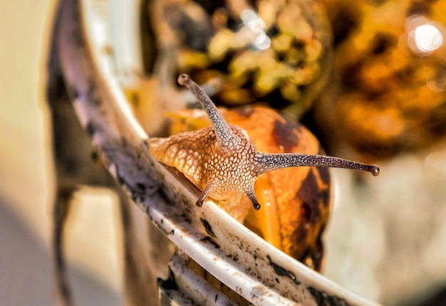 Gros plan d'un escargot sur un arrière-plan flou dans les îles canaries