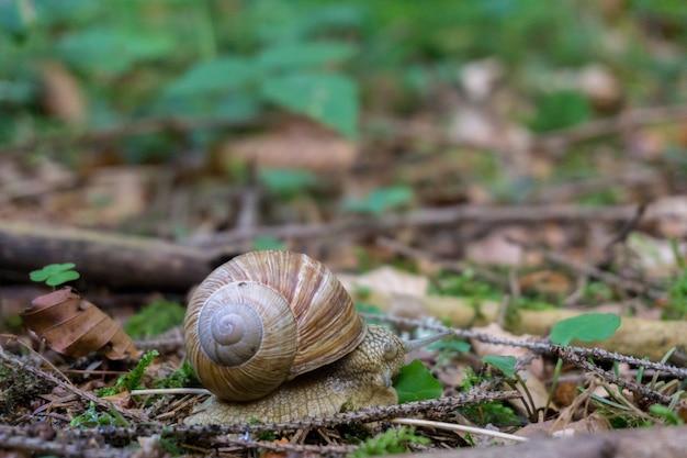 Gros plan d'un escargot sur le sol recouvert de beaucoup de feuilles sèches