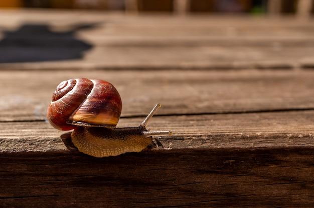 Gros plan d'un escargot sur une surface en bois