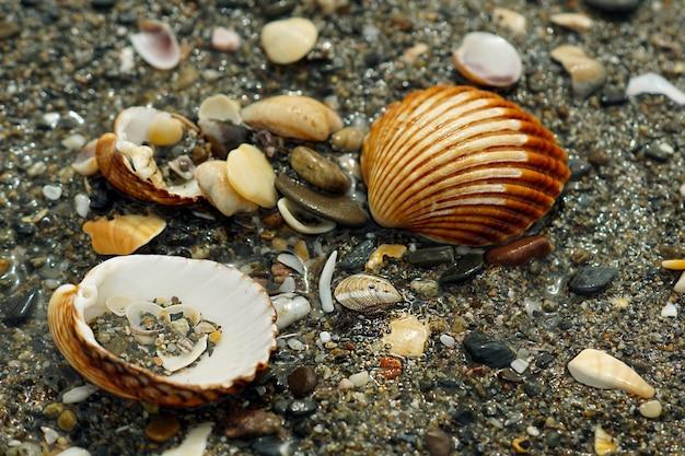 Gros plan d'escargots et de galets de différentes tailles, couleurs et formes