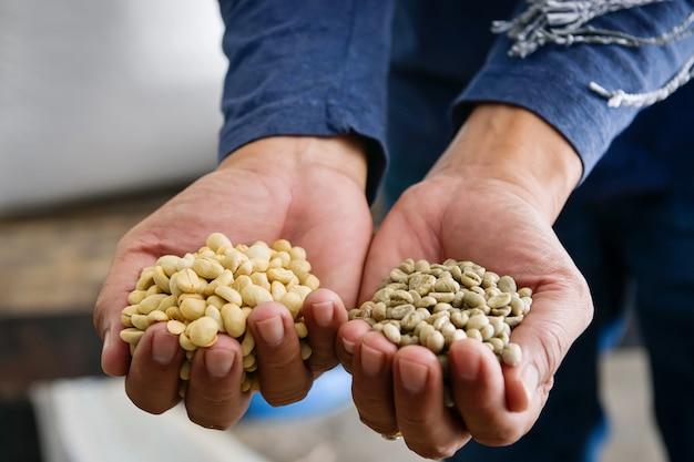 Gros plan d'espèces de grains de café arabica, qui ont subi le processus de craquage