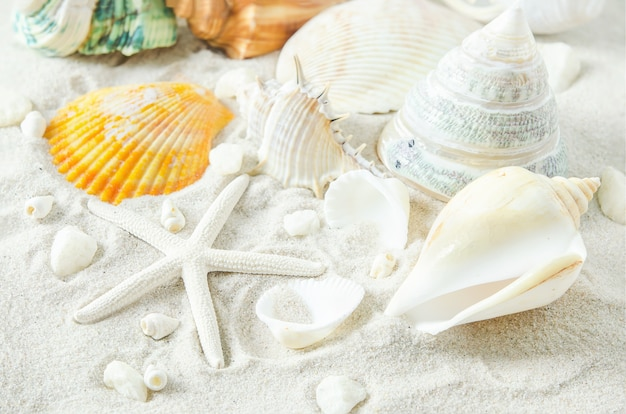 Gros plan d'étoiles de mer et de coquillages sur fond de sable blanc