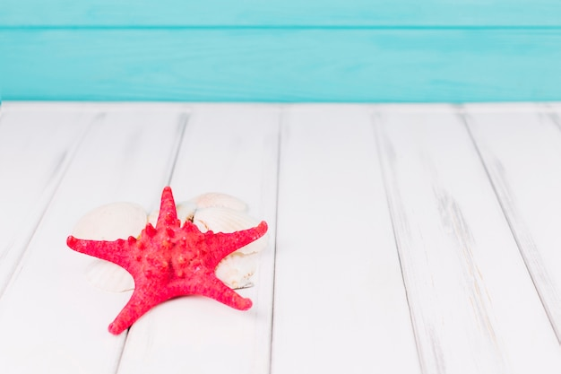 Gros plan des étoiles de mer sur les coquillages