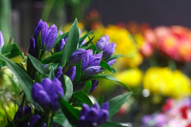 Gros plan extrême d'un bouquet de fleurs fraîches d'alstroemeria