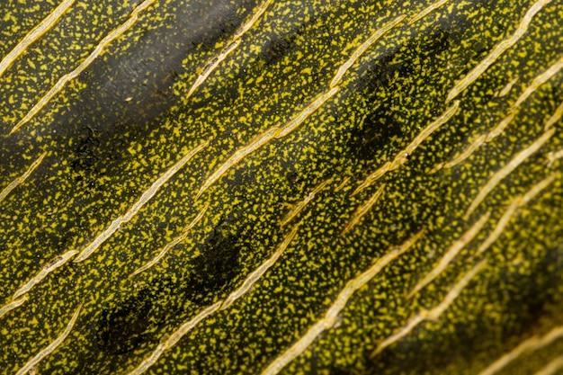 Gros plan extrême de zeste de papaye