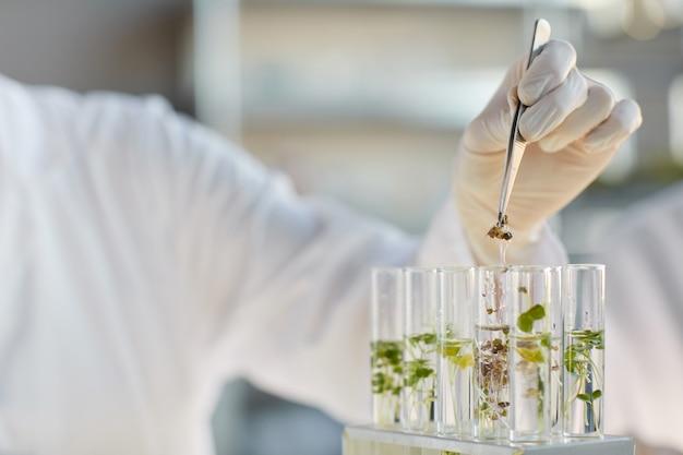 Gros plan d'une femme scientifique méconnaissable travaillant avec des tubes à essai et des échantillons de plantes tout en faisant des expériences en laboratoire de biotechnologie, copiez l'espace