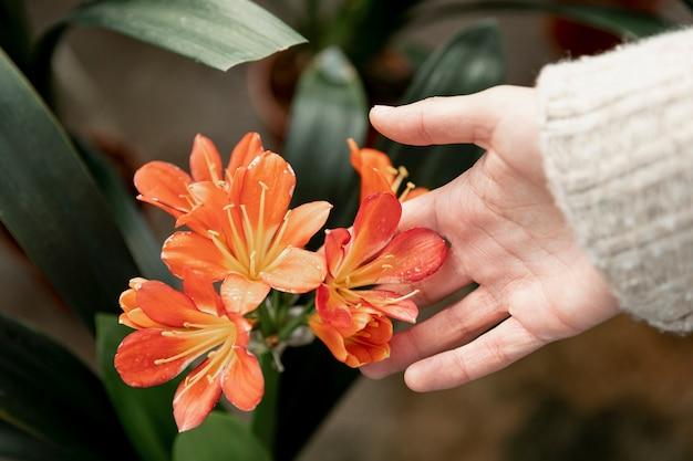 Gros plan, femme, toucher, orange, fleur