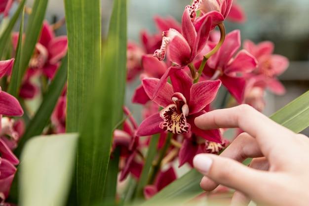 Gros plan, femme, toucher, orchidée