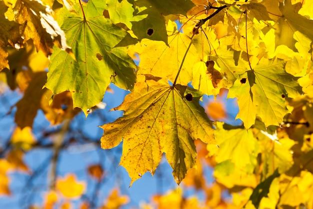 Gros plan sur le feuillage d'automne