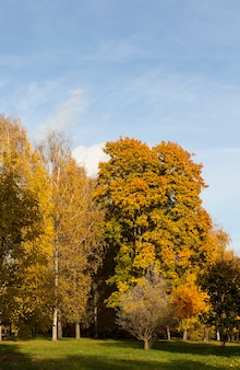 Gros plan sur le feuillage d'érable en automne