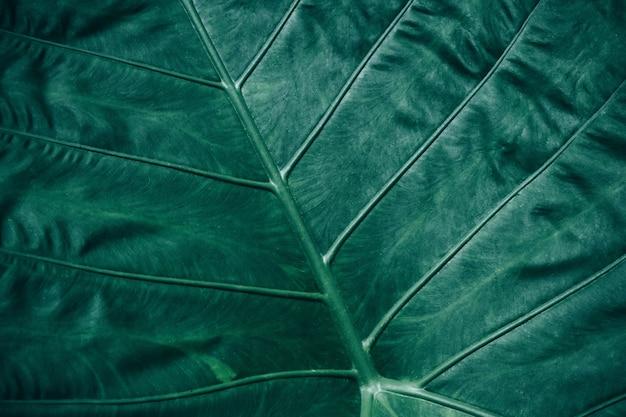 Gros plan, feuillage, de, feuille tropicale, dans, vert foncé, texture