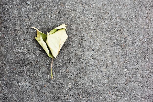 Gros plan sur une feuille d'arbre en forme de coeur sur l'asphalte. fond texturé avec espace de copie.