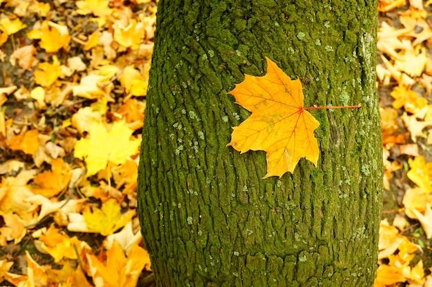 Gros plan d'une feuille sur une écorce d'arbre au cours de l'automne