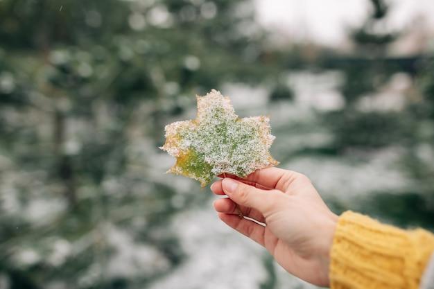 Gros plan d'une feuille d'érable verte et jaune recouverte de neige dans la main d'une jeune femme.
