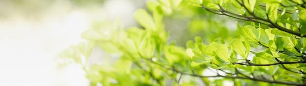 Gros plan de feuille de nature verte sur fond de verdure floue dans le jardin avec bokeh et copiez l'espace en utilisant comme arrière-plan le concept de page de couverture.