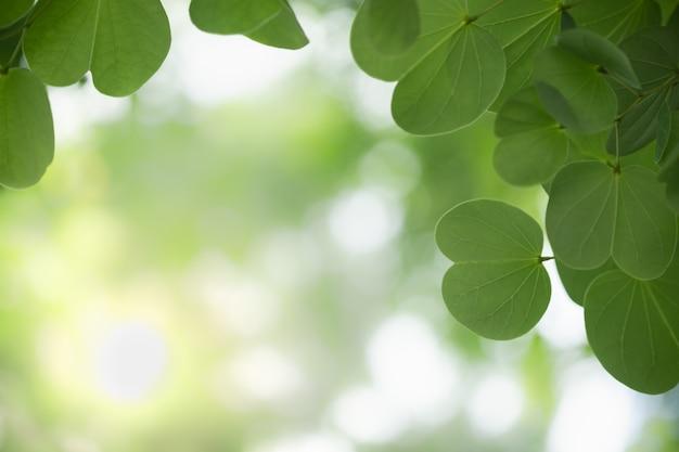 Gros plan d'une feuille de nature verte sur une verdure floue.
