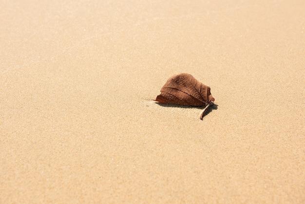Gros plan d'une feuille sèche isolée sur le sable d'une plage, de petits grains à sa surface, éclairés par la lumière du soleil.