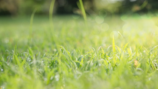 Gros plan d'une feuille verte sur un arrière-plan flou dans le jardin comme concept de fond d'écran frais,