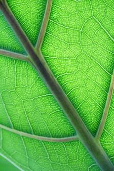 Gros plan d'une feuille verte contre le soleil
