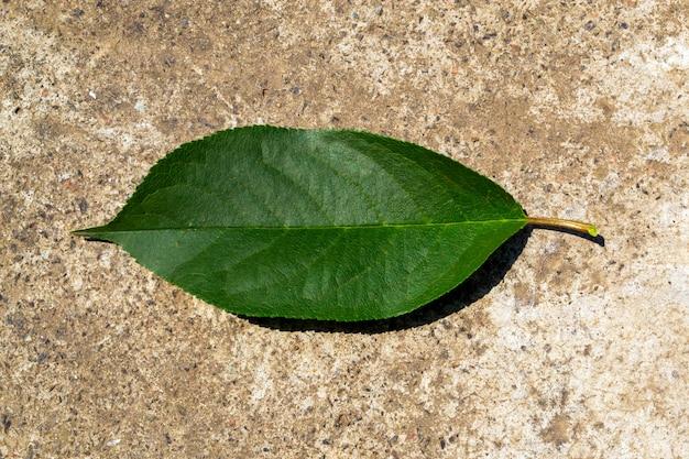 Gros plan de feuille verte, sur fond gris