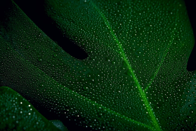 Gros plan d'une feuille verte avec des gouttes d'eau sur un fond rayé.