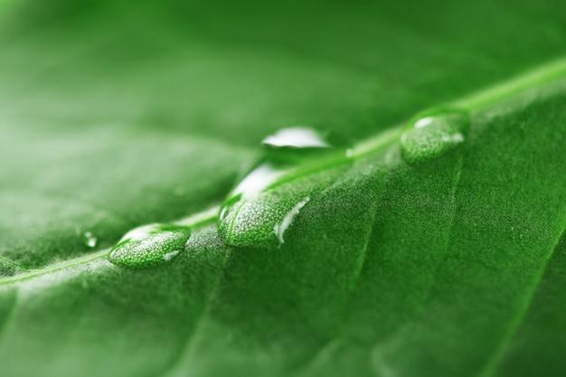 Gros plan, de, feuille verte, à, gouttes