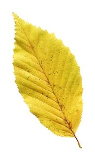 Gros plan de feuilles d'automne isolé sur blanc
