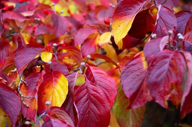 Gros plan des feuilles d'automne rouges
