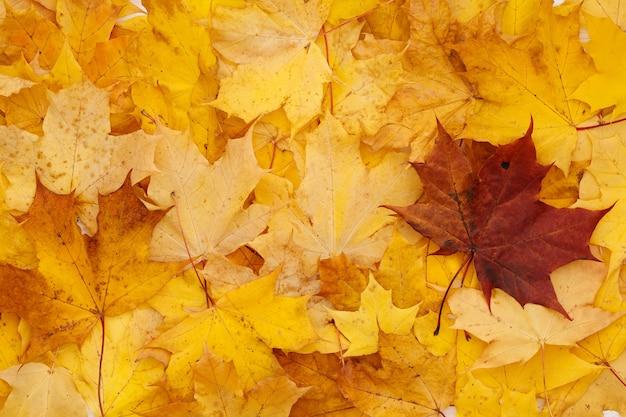 Gros plan des feuilles d'automne se trouvent sur une table en bois blanc