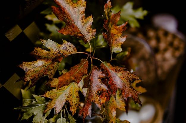 Gros plan de feuilles de chêne rouge et jaune