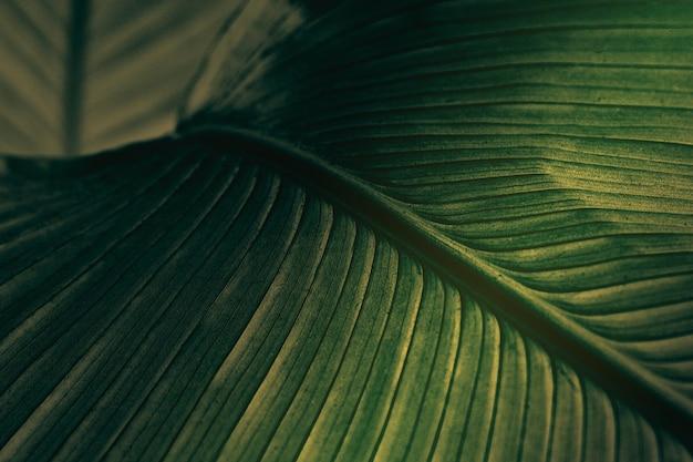 Gros plan de feuilles de fleurs de cigare vert