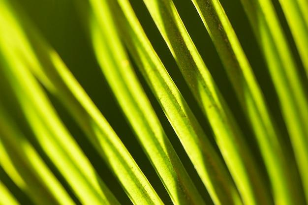 Gros plan, feuilles, fond organique