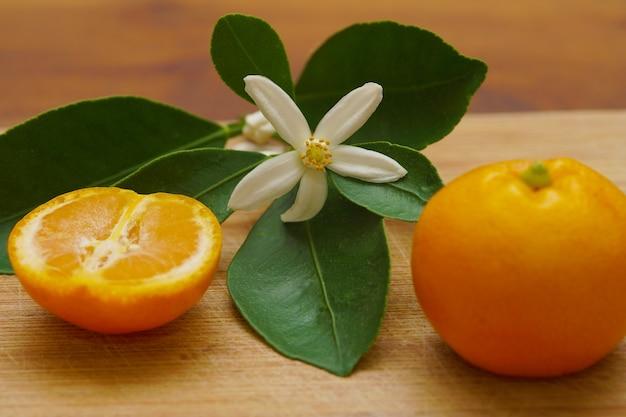 Gros plan des feuilles de fruits orange calamondine et fleur