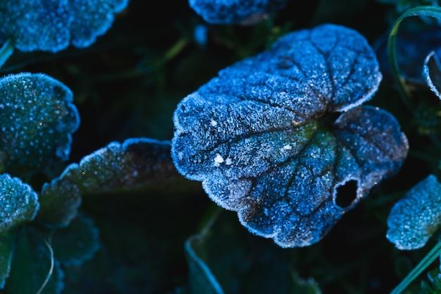 Gros plan de feuilles gelées dans le parc maksimir à zagreb, croatie pendant la journée
